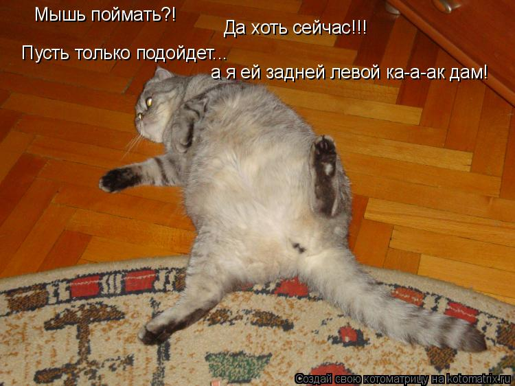 Котоматрица: Мышь поймать?! Пусть только подойдет... а я ей задней левой ка-а-ак дам! Да хоть сейчас!!!