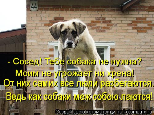 Котоматрица: - Сосед! Тебе собака не нужна? Моим не угрожает ни хрена! От них самих все люди разбегаются... Ведь как собаки меж собою лаются!