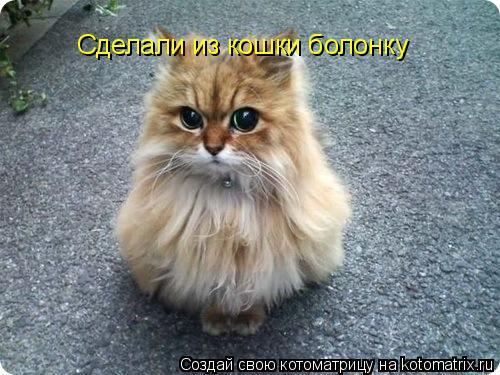 Котоматрица: Сделали из кошки болонку