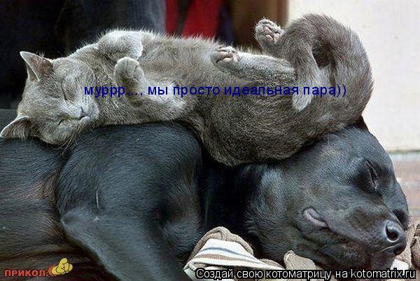Котоматрица: муррр..., мы просто идеальная пара))