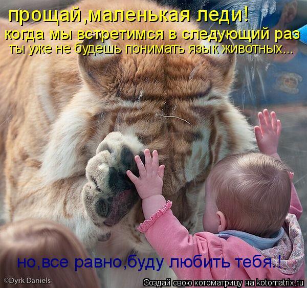 Котоматрица: прощай,маленькая леди! когда мы встретимся в следующий раз ты уже не будешь понимать язык животных... но,все равно,буду любить тебя.!