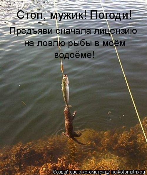 вся ловля на сети в россии