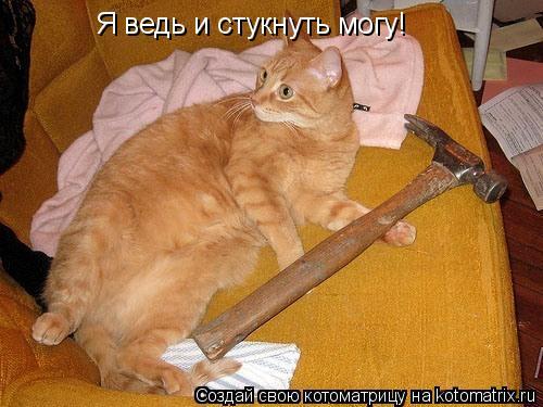 Котоматрица: Я ведь и стукнуть могу!