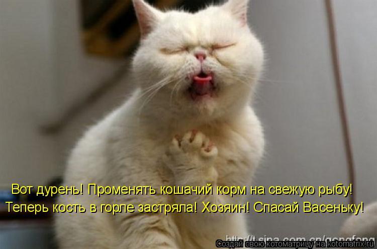Котоматрица: Вот дурень! Променять кошачий корм на свежую рыбу! Теперь кость в горле застряла! Хозяин! Спасай Васеньку!