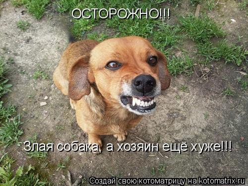 Котоматрица: ОСТОРОЖНО!!! Злая собака, а хозяин ещё хуже!!!
