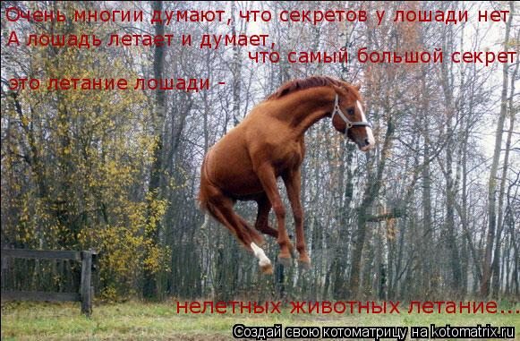 Котоматрица: А лошадь летает и думает, Очень многии думают, что секретов у лошади нет что самый большой секрет это летание лошади -  нелетных животных лет