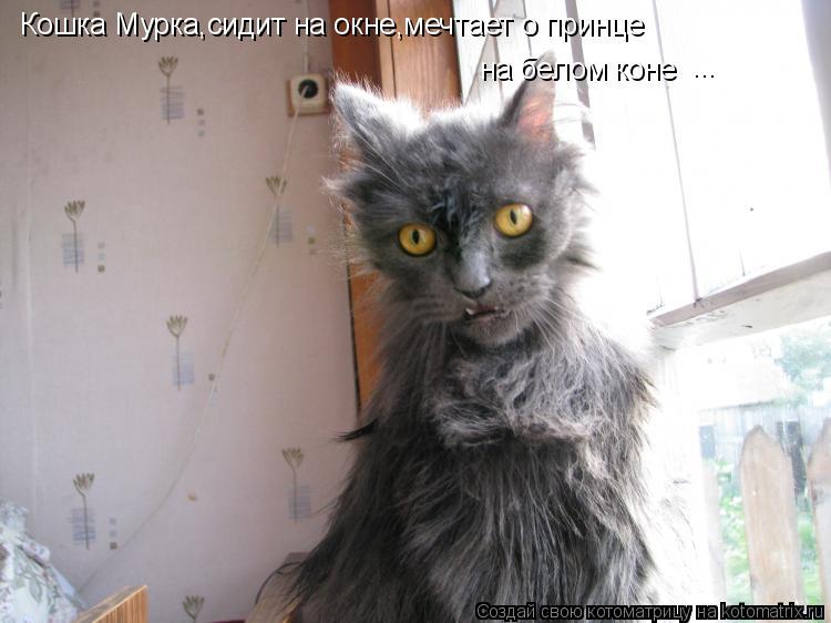 Котоматрица: Кошка Мурка,сидит на окне,мечтает о принце на белом коне ...