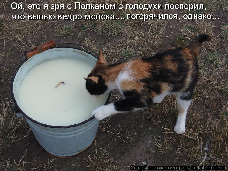 Котоматрица: Ой, это я зря с Полканом с голодухи поспорил, что выпью ведро молока.... погорячился, однако...