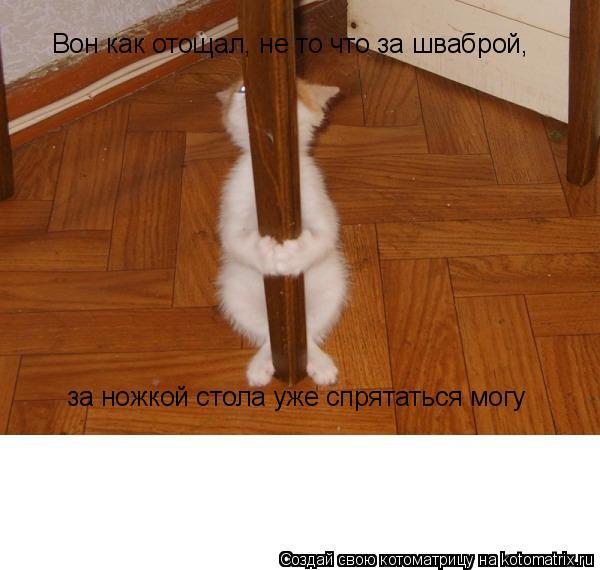 Котоматрица: Вон как отощал, не то что за шваброй,  за ножкой стола уже спрятаться могу