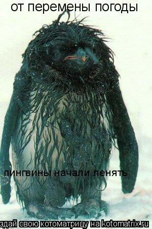 Котоматрица: от перемены погоды пингвины начали ленять