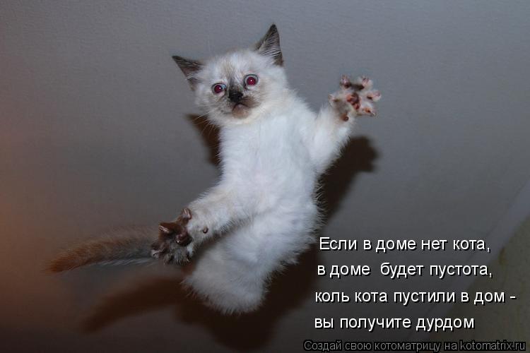 Котоматрица: Если в доме нет кота, в доме  будет пустота, коль кота пустили в дом - вы получите дурдом