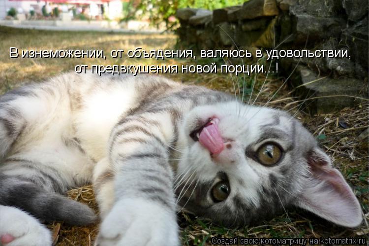 Котоматрица: В изнеможении, от объядения, валяюсь в удовольствии, от предвкушения новой порции...!