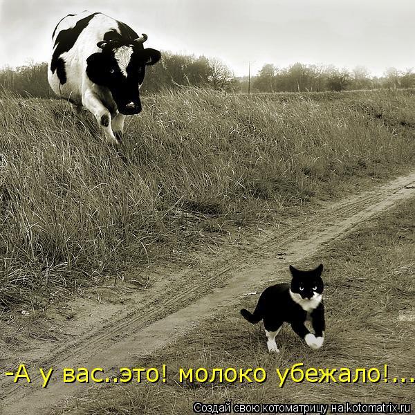 Котоматрица: -А у вас..это! молоко убежало!......