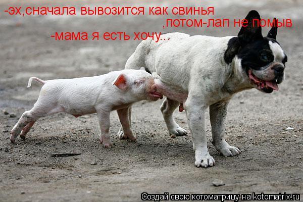 Котоматрица: -эх,сначала вывозится как свинья ,потом-лап не помыв -мама я есть хочу...