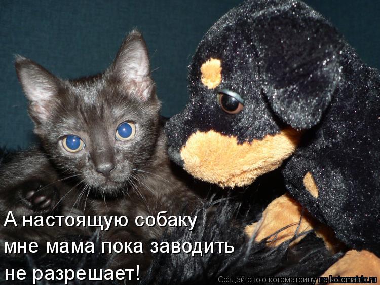 Котоматрица: А настоящую собаку мне мама пока заводить не разрешает!