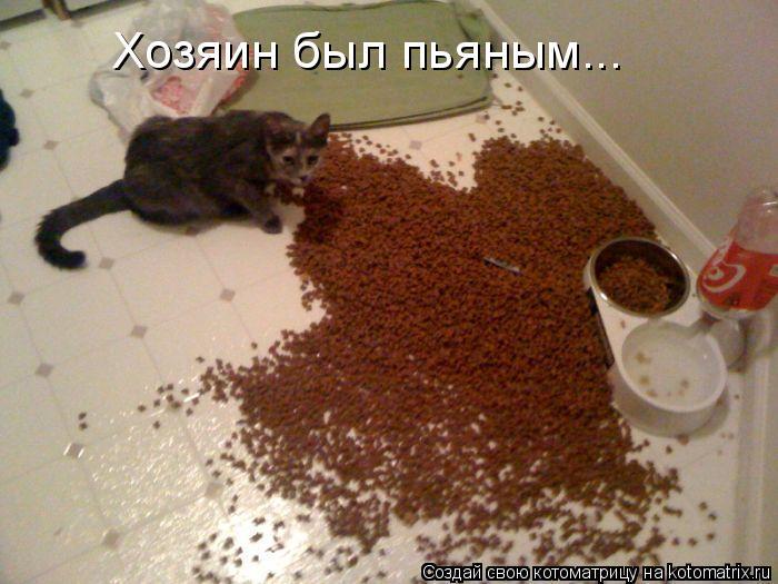 Котоматрица: Хозяин был пьяным...