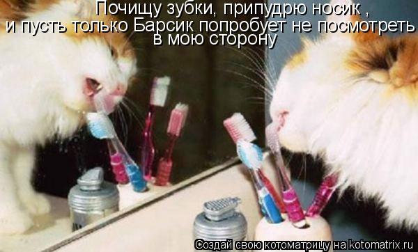 Котоматрица: Почищу зубки, припудрю носик , и пусть только Барсик попробует не посмотреть  в мою сторону