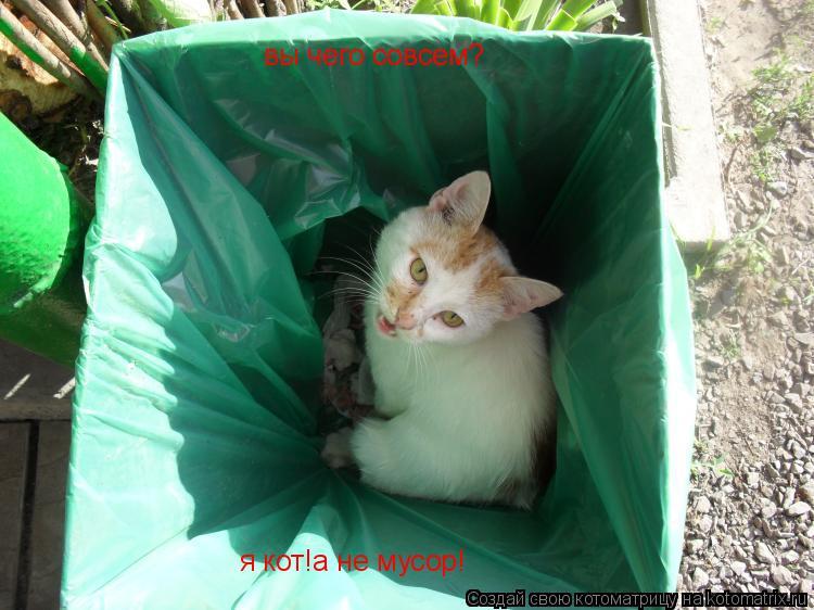 Котоматрица: вы чего совсем? я кот!а не мусор!