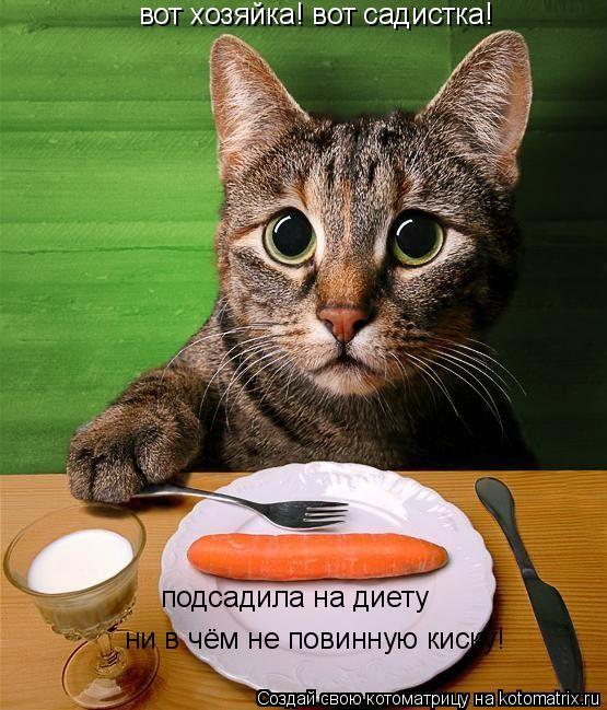 Госпожа садистка ярославль 4 фотография