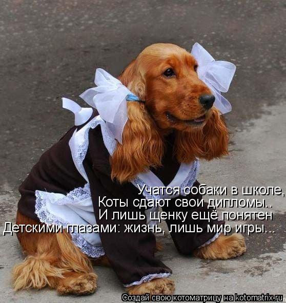 Котоматрица: Учатся собаки в школе, Коты сдают свои дипломы.. Коты сдают свои дипломы.. И лишь щенку ещё понятен Детскими глазами: жизнь, лишь мир игры...