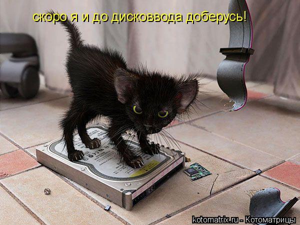 Котоматрица: скоро я и до дисковвода доберусь!