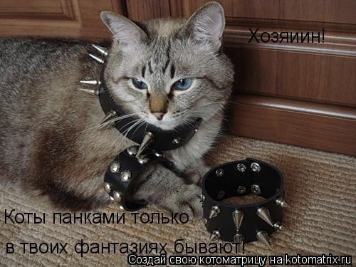 Котоматрица: Хозяиин! Коты панками только в твоих фантазиях бывают!