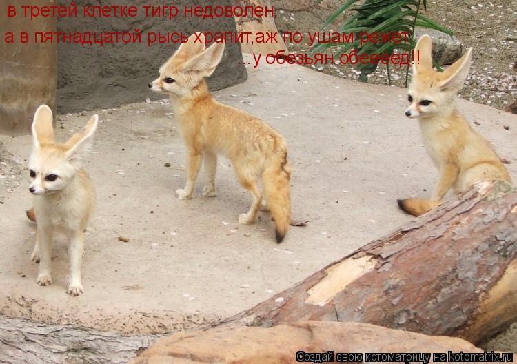 Котоматрица: в третей клетке тигр недоволен.  а в пятнадцатой рысь храпит,аж по ушам режет ...у обезьян обеееед!!