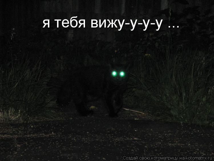 Котоматрица: я тебя вижу-у-у-у ...
