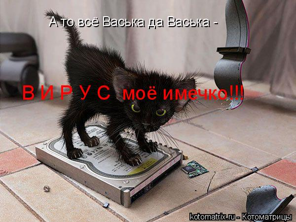 Котоматрица: А то всё Васька да Васька - В И Р У С  моё имечко!!!