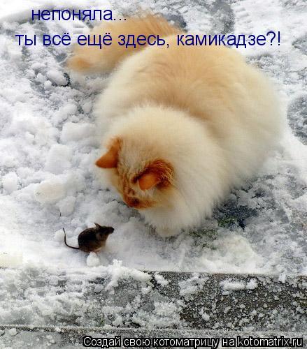 Котоматрица: непоняла... ты всё ещё здесь, камикадзе?!