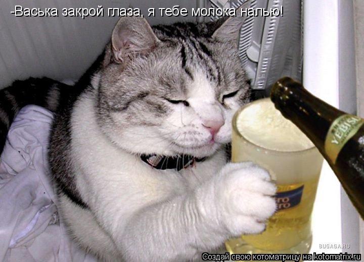 Котоматрица: -Васька закрой глаза, я тебе молока налью!