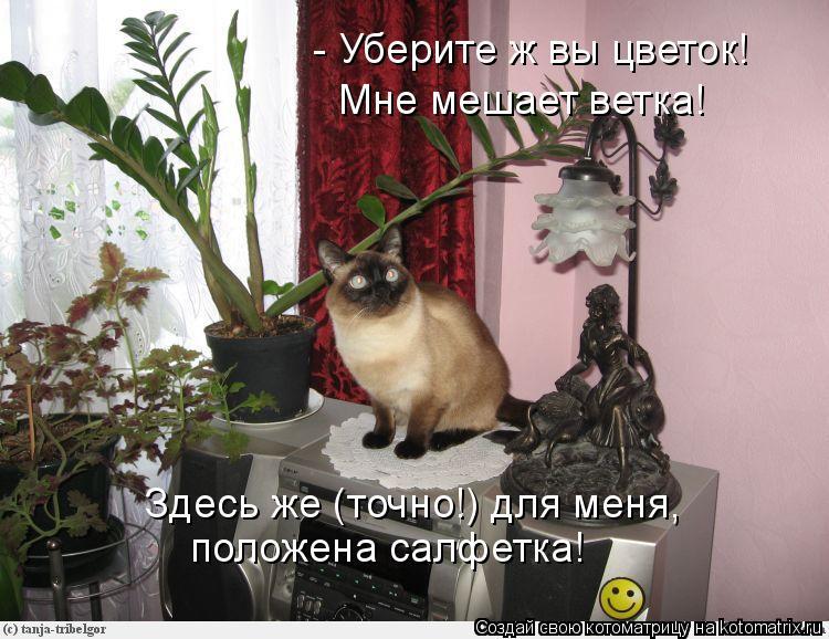Котоматрица: - Уберите ж вы цветок! Мне мешает ветка! Здесь же (точно!) для меня, положена салфетка!