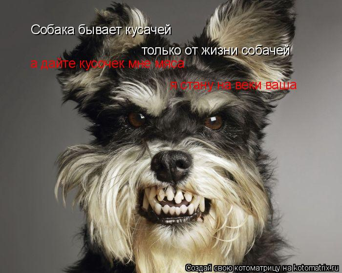 Котоматрица: Собака бывает кусачей только от жизни собачей а дайте кусочек мне мяса я стану на веки ваша
