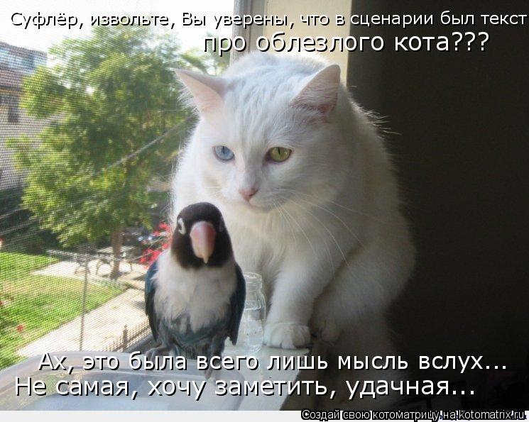 Котоматрица: Суфлёр, извольте, Вы уверены, что в сценарии был текст про облезлого кота??? Ах, это была всего лишь мысль вслух... Не самая, хочу заметить, удач