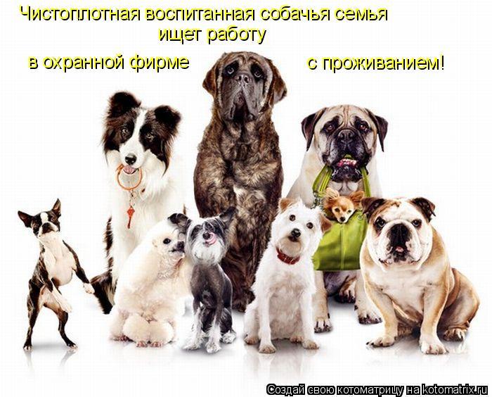 Котоматрица: Чистоплотная воспитанная собачья семья  ищет работу в охранной фирме  с проживанием!
