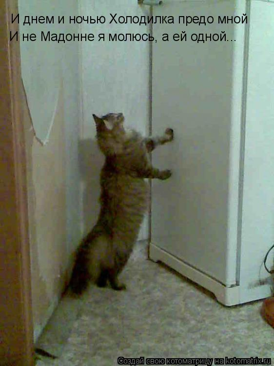 Котоматрица: И днем и ночью Холодилка предо мной И не Мадонне я молюсь, а ей одной...