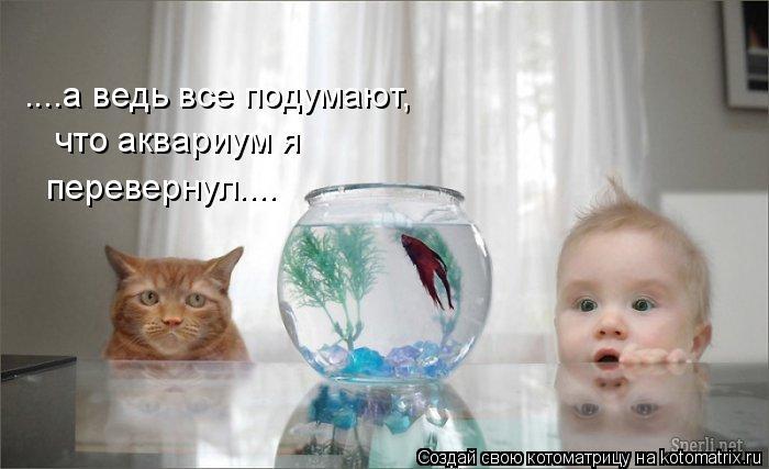 Котоматрица: ....а ведь все подумают,  что аквариум я перевернул....