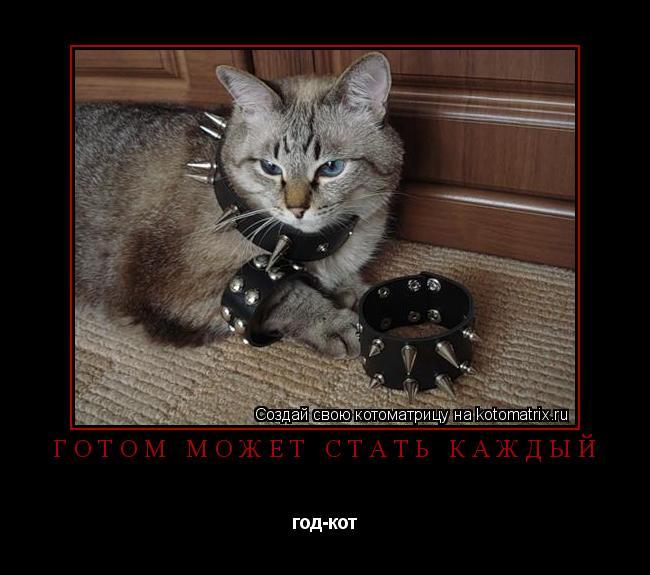Котоматрица: готом может стать каждый  год-кот