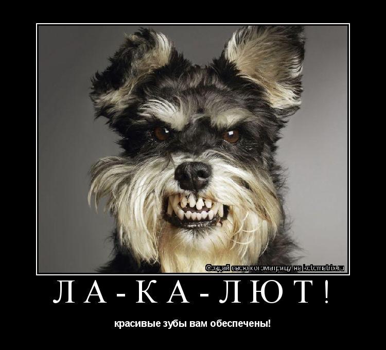 Котоматрица: ЛА-КА-ЛЮТ! красивые зубы вам обеспечены!