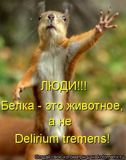 Котоматрица: ЛЮДИ!!! Белка - это животное, а не Delirium tremens!