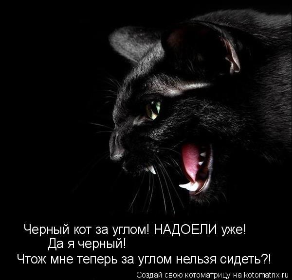 Котоматрица: Черный кот за углом! НАДОЕЛИ уже!  Да я черный!   Чтож мне теперь за углом нельзя сидеть?!