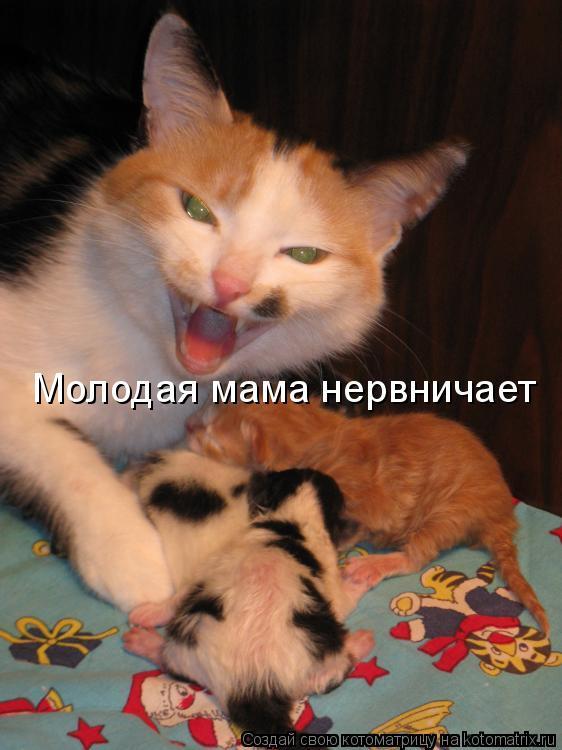 Котоматрица: Молодая мама нервничает
