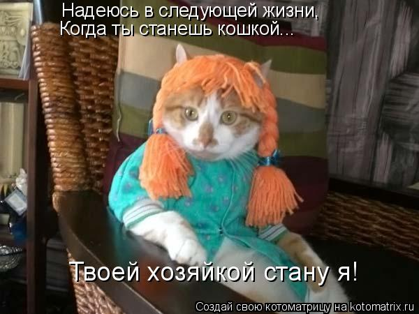 Котоматрица: Надеюсь в следующей жизни, Когда ты станешь кошкой... Твоей хозяйкой стану я!