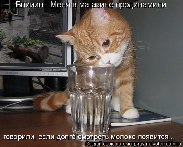 Котоматрица: Блииин...Меня в магазине продинамили говорили, если долго смотреть молоко появится...