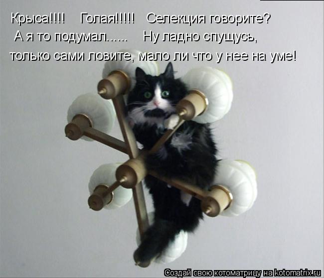 Котоматрица: Крыса!!!!    Голая!!!!!   Селекция говорите? А я то подумал......    Ну ладно спущусь, только сами ловите, мало ли что у нее на уме!