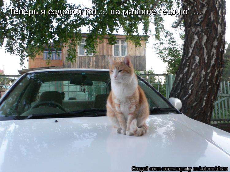 """Котоматрица: Теперь я ездовой кот ... на машине """"ездию"""" ..."""