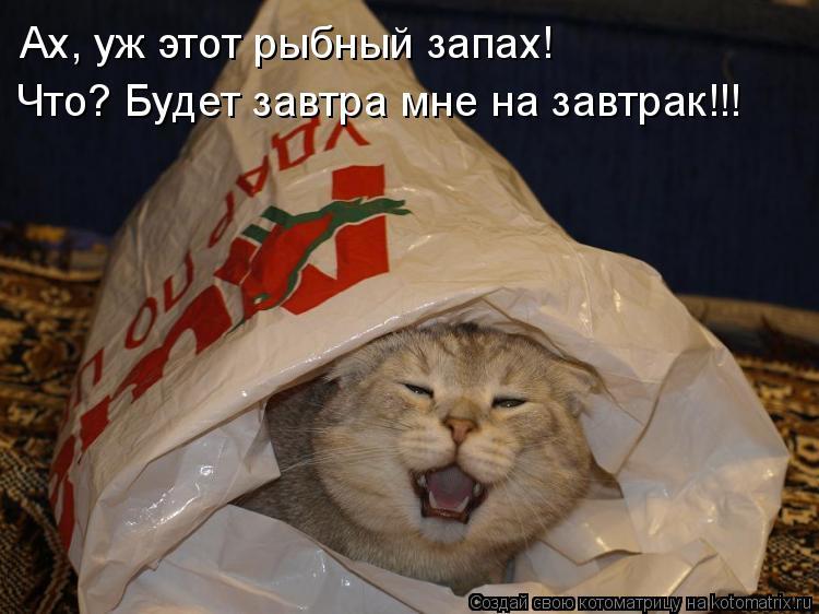 Котоматрица: Ах, уж этот рыбный запах! Что? Будет завтра мне на завтрак!!!
