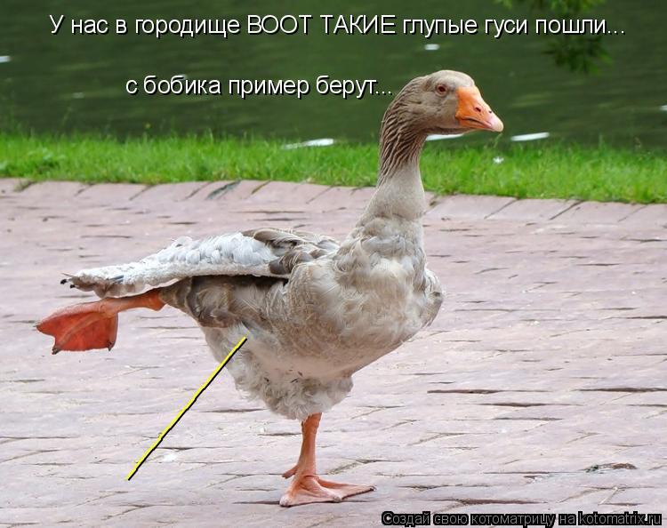 Котоматрица: У нас в городище ВООТ ТАКИЕ глупые гуси пошли... с бобика пример берут... ______________
