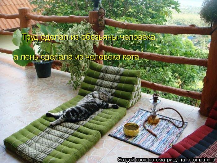 Котоматрица: Труд сделал из обезьяны человека, а лень сделала из человека кота