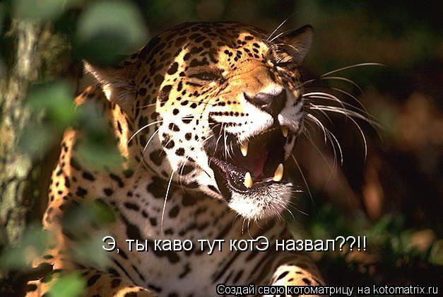 Котоматрица: Э, ты каво тут котЭ назвал??!!